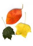 Drei verschiedene Blätter Stockfotos