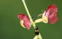 Drei verschiedene Insekte Lizenzfreie Stockfotografie