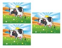 Drei verschiedene Kühe auf der grünen Wiese Stockfoto