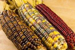 Drei von Ohren des indischen Mais Lizenzfreies Stockfoto