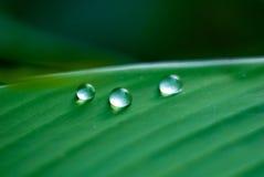 Drei Wassertropfen auf einem grünen Blatt Lizenzfreie Stockbilder