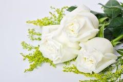 Drei weiße Rosen lizenzfreies stockbild