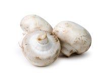 Drei weiße Tasten-Pilze Stockfoto