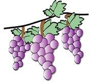 Drei Weintrauben lizenzfreie stockfotografie
