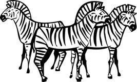 Drei Zebras lizenzfreie abbildung