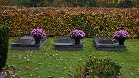 Drei Zeitblumen auf einem Grab lizenzfreie stockfotografie