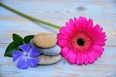 Drei Zensteine auf altem Holz mit purpurroter Anzeige zacken Blume aus Stockfotografie