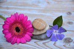 Drei Zensteine auf benutztem Holz mit den purpurroten und rosa Blumen Lizenzfreies Stockfoto