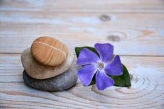 Drei Zensteine auf benutztem Holz mit purpurroten Blumen Lizenzfreie Stockbilder
