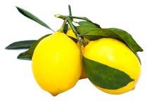 Drei Zitronen auf einer Niederlassung mit Blättern Lizenzfreie Stockbilder