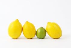 Drei Zitronen und ein Kalk Lizenzfreies Stockbild