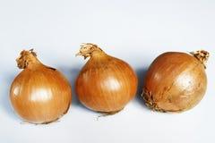 Drei Zwiebeln auf weißem Hintergrund lizenzfreie stockfotografie
