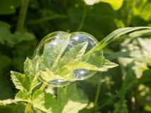 Dreifache Seifenblase auf Grasrasen Lizenzfreie Stockfotografie