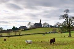 Dreifaltigkeit-Kirche Bardsea mit Feldern und Schafen. Stockfotografie
