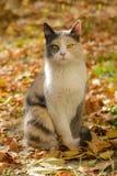 Dreifarbige Katze von einem Schutz Stockfotos