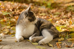 Dreifarbige Katze von einem Schutz stockfoto