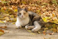 Dreifarbige Katze von einem Schutz lizenzfreie stockfotos