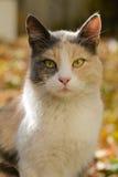 Dreifarbige Katze von einem Schutz Stockbilder