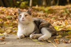 Dreifarbige Katze von einem Schutz lizenzfreies stockbild