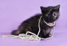 Dreifarbiges flaumiges Kätzchen mit Perlen um Hals sitzt auf Purpur Stockfoto