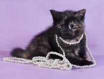 Dreifarbiges flaumiges Kätzchen mit Perlen um Hals sitzt auf Purpur Lizenzfreies Stockfoto