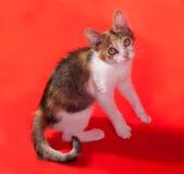 Dreifarbiges Kätzchen, das auf Rot springt Stockfotografie