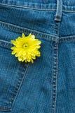 drelichowy kwiat Zdjęcie Royalty Free