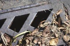 Dren del camino con las hojas Fotografía de archivo libre de regalías
