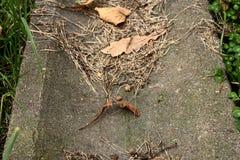 Dren viejo en hojas foto de archivo libre de regalías