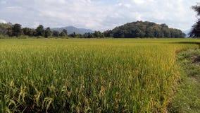 Drenaggio della raccolta di progetto di irrigazione per agricoltura Fotografia Stock Libera da Diritti