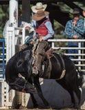 Drenaje del caballo oscuro Foto de archivo