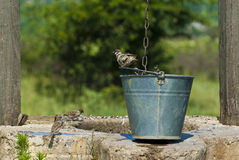 Drene-bien los pájaros Foto de archivo
