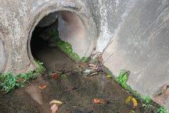 drene el agua Contaminación sucia del dren y de agua Fotografía de archivo