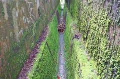 Drene sin el agua cubierta con el musgo verde Imagen de archivo