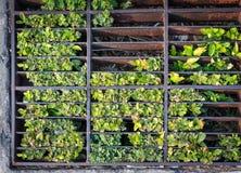Dreno público com as plantas que crescem para dentro Foto de Stock