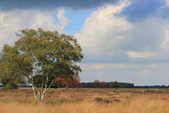 Drenthe region in the Netherlands, national park Dwingelderveld. Heathland, field in Drenthe with trees grasses and heath. The Netherlands Stock Photography