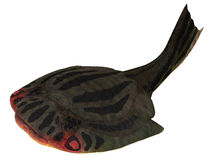 Drepanaspis Fish over White Royalty Free Stock Photo