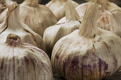 Dress Garlic Stock Photography
