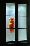 dress store window Στοκ Φωτογραφία