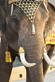 Dress-up elephant Stock Photography