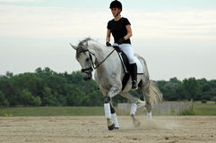 dressage Royaltyfri Foto