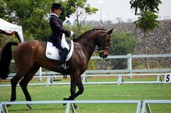Dressage 3 Royalty Free Stock Image