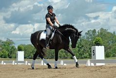 Dressage Photo stock