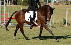 Лошадь Dressage Стоковые Изображения