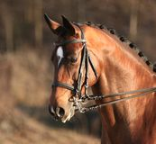 Dressage Stockbild