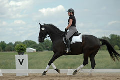 dressage Obrazy Royalty Free