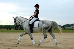 Dressage images stock