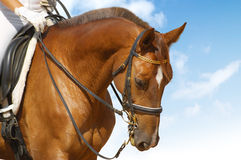 Dressage. Sorrel horse: dressage - equestrian sport Royalty Free Stock Photography