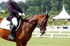 Dressage. A horse rider in dressage competition Stock Photos