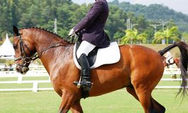 Dressage Horse. A rider rides chestnut gelding horse in dressage competition Stock Photography
